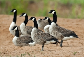 Listening Post #21: Of Tucson, Wild Geese, and BeingHuman
